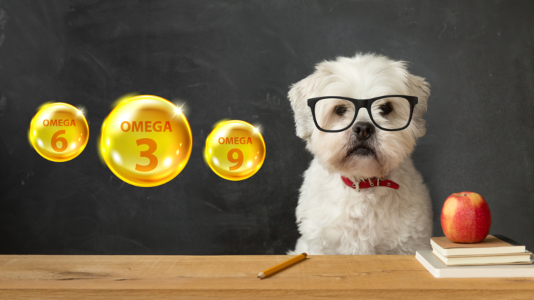 How to choose the Best Omega treats for dogs?