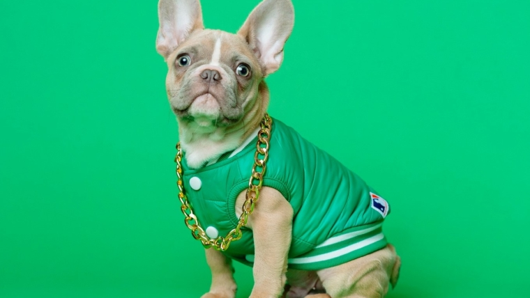 Typical diseases of the French Bulldog