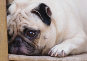 Dog Anxiety: What Every Owner Should Know. How To Deal With Dog Anxiety