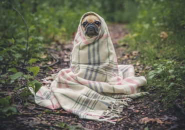 Top 5 Natural Allergy supplements for dogs