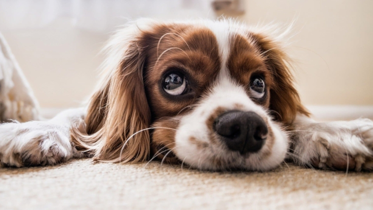 Common Eye Problems in Dogs. Does Your Dog Need A Supplement for Eye Health?