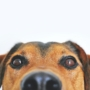 Omega-3 for dogs: What is it? Benefits, sources, and dosage.